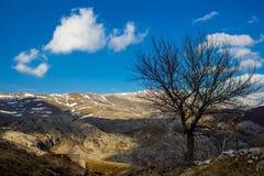 Дерево в горах Стоковое Фото