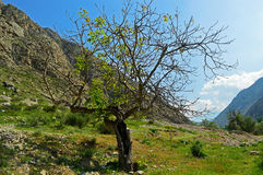 Дерево в горах Стоковые Изображения