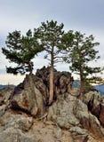 Дерево в горах Стоковая Фотография RF