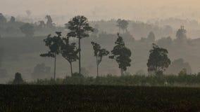 Дерево в горе Стоковые Фотографии RF