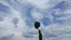 Дерево в горизонте Стоковая Фотография