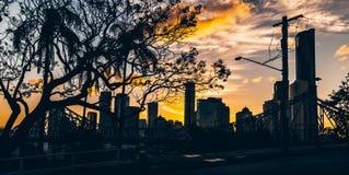 Дерево в городе на заходе солнца стоковое фото rf