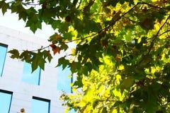 Дерево в городке Стоковая Фотография
