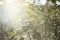 Дерево в дождевых каплях Стоковые Фото