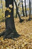 Дерево в желтом парке осени Стоковая Фотография