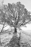 Дерево в заходе солнца Стоковое фото RF