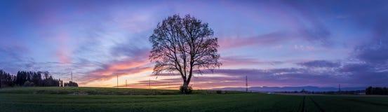 Дерево в заходе солнца Стоковое Изображение