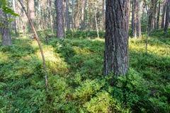 Дерево в зеленом луге около моря Стоковые Фото