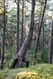 Дерево в зеленом луге около моря Стоковые Изображения RF