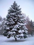 Дерево в зиме под снегом Стоковое Изображение