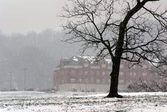 Дерево в зиме с снегом стоковое изображение