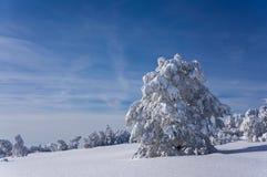 Дерево в зиме Стоковое Изображение