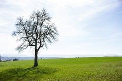 Дерево в зиме стоковые фото