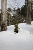 Дерево в зиме Стоковые Изображения
