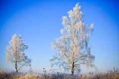 Дерево в зиме Стоковая Фотография