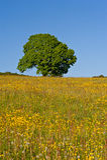 Дерево в лете Стоковое Фото
