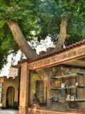 Дерево в магазине Стоковая Фотография