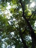 Дерево в моей школе Стоковая Фотография