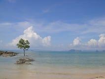 Дерево в море Стоковое Фото
