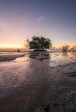 Дерево в море стоковые фото