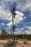 Дерево в небе Стоковые Изображения