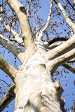 Дерево в небе Стоковые Изображения RF