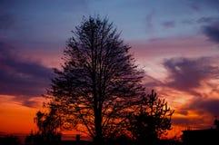 Дерево в ноче Стоковые Изображения