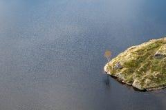 Дерево в озере стоковая фотография