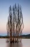 Дерево в озере Стоковые Фото