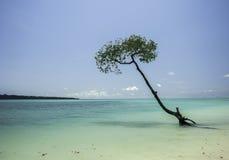 Дерево в океане Стоковое Изображение RF