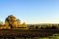 Дерево в осени Стоковая Фотография