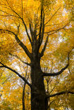 Дерево в осени Стоковые Изображения