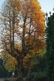 Дерево в осени Стоковое Фото