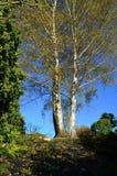 Дерево в осени Стоковые Фотографии RF