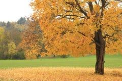 Дерево в осени Стоковые Фото