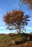 Дерево в осени Стоковое фото RF