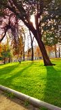 Дерево в осени стоковая фотография rf