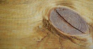 Дерево в отрезке - текстурная предпосылка Стоковое Изображение