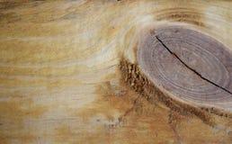 Дерево в отрезке - текстурная предпосылка Стоковое Фото