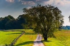 Дерево вдоль грязной улицы в сельском Howard County, Мэриленде Стоковые Изображения RF