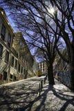 Дерево вдоль улицы, Лиссабона, Португалии Стоковая Фотография RF
