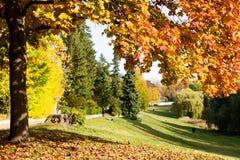 Дерево осени в парке Стоковые Фото