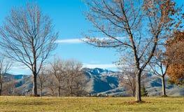 Дерево в парке с солнечным днем Стоковые Изображения RF