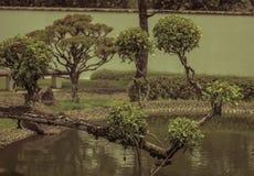 Дерево в парке стоковые изображения