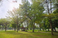 Дерево в парке Стоковое Фото