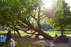 Дерево в парке стоковая фотография rf