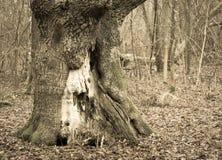 Дерево в парке стоковые фотографии rf