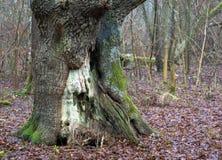 Дерево в парке стоковое изображение
