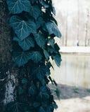 Дерево в парке Maksimir в Загребе Стоковые Фотографии RF