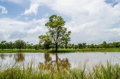 Дерево в падие Стоковое Изображение RF